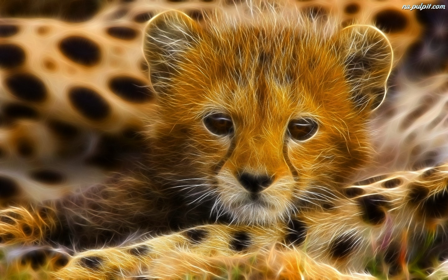 big 3d animal wallpaper - photo #48